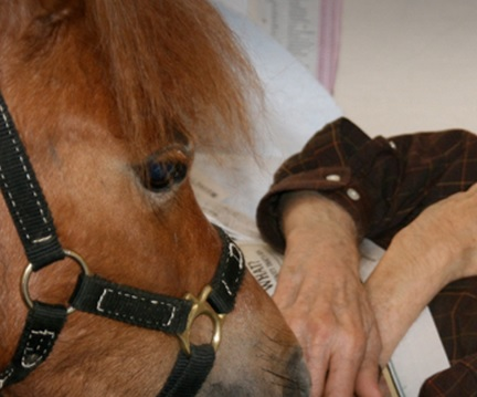 hospice with a horse
