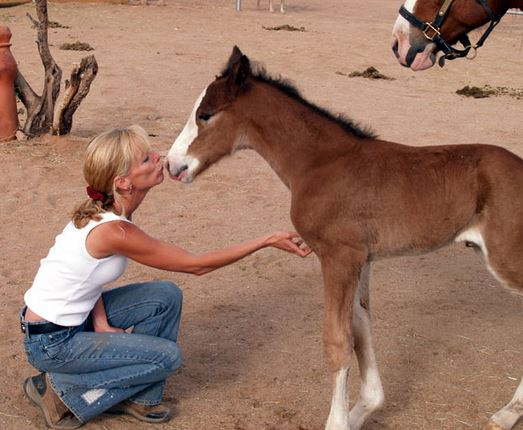 Equine Voices Rescue and Sanctuary President, Karen Pomroy with rescued foal