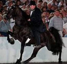 tennesse_walking_horse