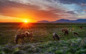 wildhorses3