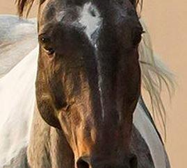 wildhorses7