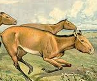 ancienthorses