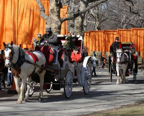 Central Park Horse Drawn Carriages