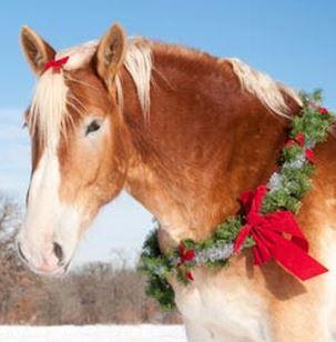 christmashorse