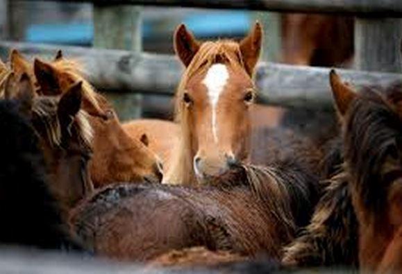 The slaughter of horses needs to stop now.
