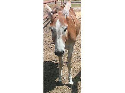 Ted - adoptable donkey