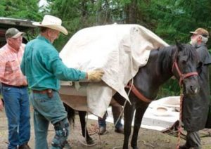 From http://www.backcountryhorse.com/index.html