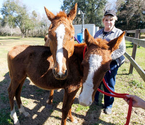 Carole Anne Pujazon and two surviving horses