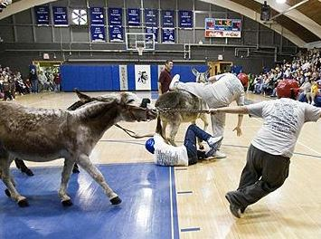 Donkey Basketball