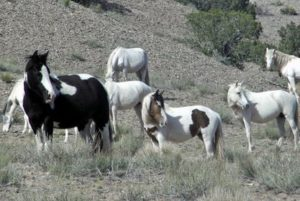 Wild horses in New Mexico