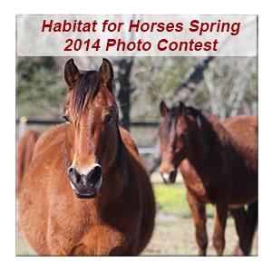 HfH Photo Contest