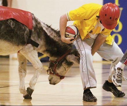 donkeybasket2