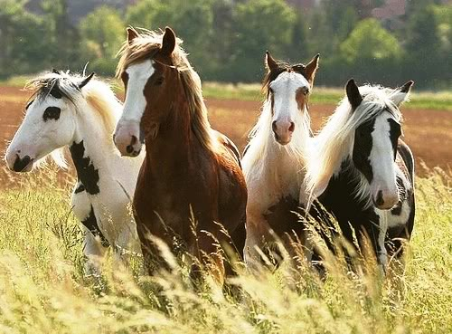 Horses set to gain health benefits from stem cell advance for Equine motor neuron disease in horses
