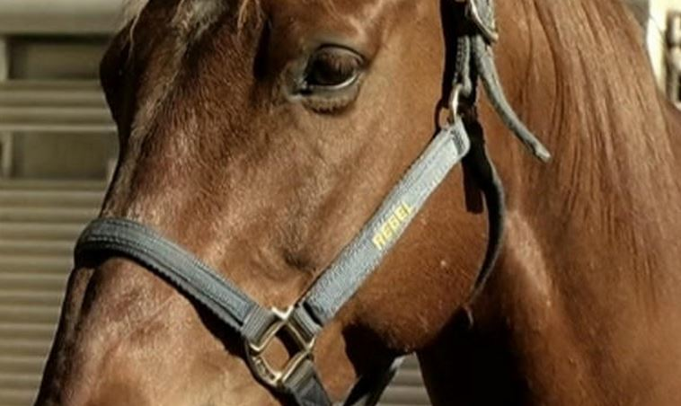 After a horse named Scuppy bit a boy in the face, a Connecticut court came to a conclusion that threw animal lovers: horses are a naturally vicious species.