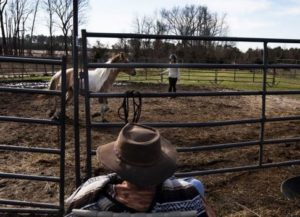 Troubled teens train horses