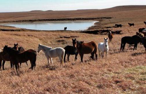 wild_horses_flint_hills