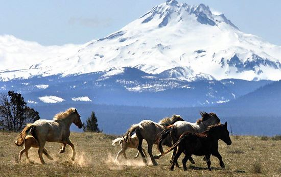 wild horses in Oregon