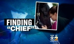 Finding missing NJ horse Chief