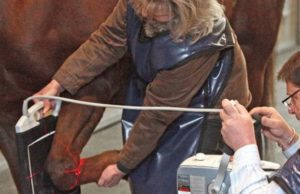 Veterinarian Ted Vlahos and Assistant work to help a horse