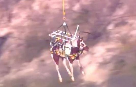 Dakota rescued from canyon