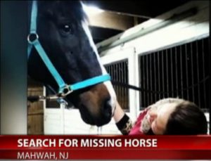 DO NOT CHASE! The Vulgaris family believes Chief is likely very scared at this point. Chasing the horse may push it further away. If you spot Chief, call the police immediately.