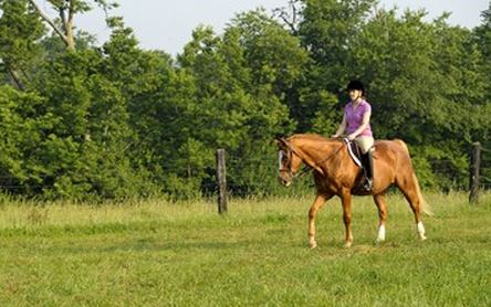 Older horses study