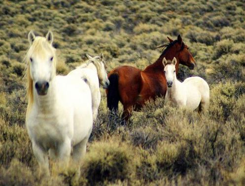 Wild horses are NOT looking for government handouts.