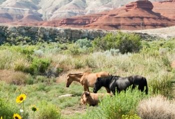 Blood on their hands - secret BLM round up - horses sent to Canadian slaughtehouse.
