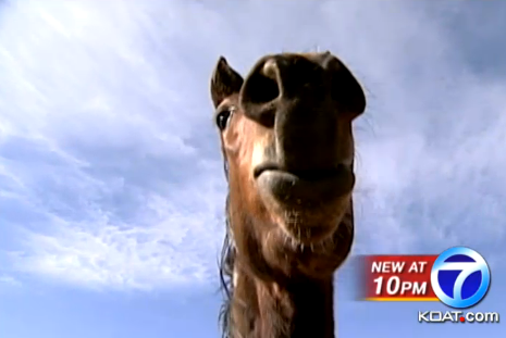 valley meat not to slaughter horses