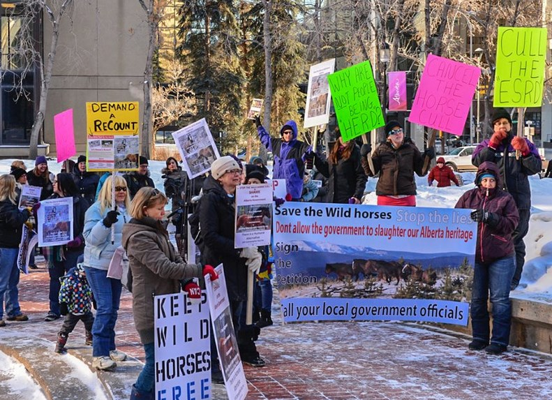 Protests against wild horse round ups by Canadians