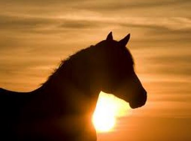 forgivinghorse