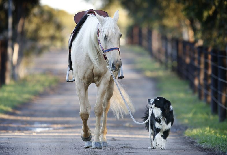 horse-and-dog
