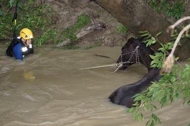 Weston rescued from flooded creek. Credit: Travis County ESD4 Facebook page