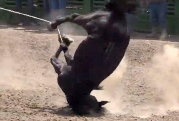 horsetripping