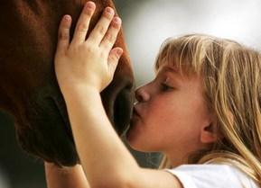 Horses are companion animals. We do not eat companion animals. Photo: Al Bello Getty Images