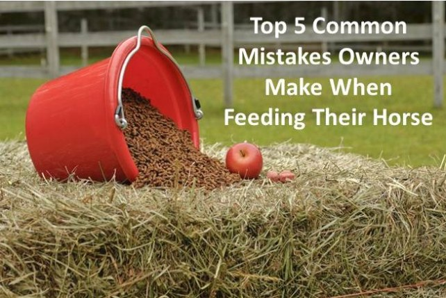top 5 horse feeding mistakes