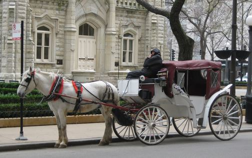 Chicago Horse Carriage Rides