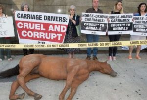 NYC horse carriage protesters with dead horse figure
