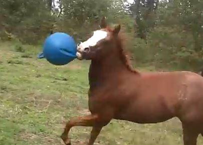 funhorse
