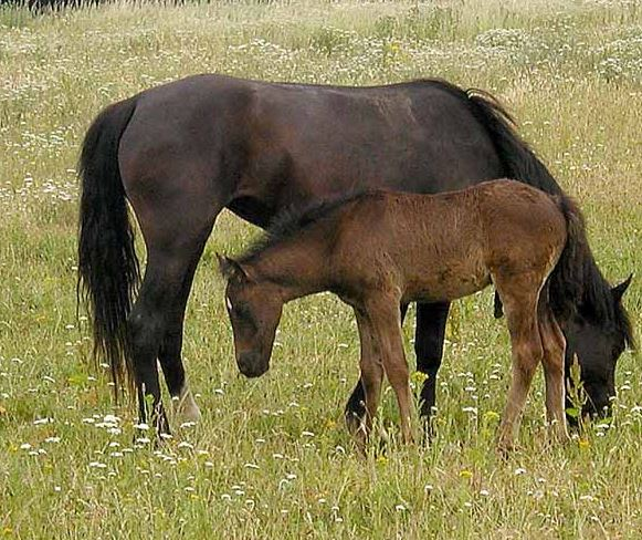 horse_breeding