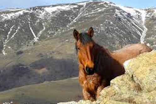 horse_in_alaska