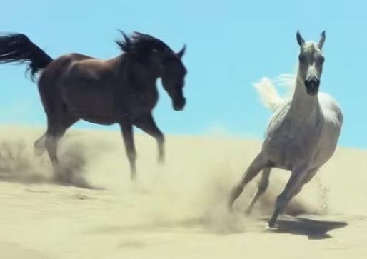 horsesrunning