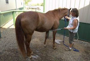 keep horses cool in hot weather