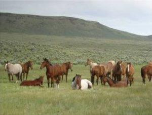 humboldt_wild_horses