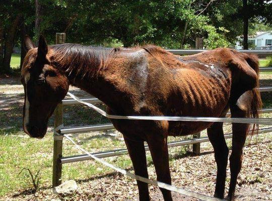 starved_horse