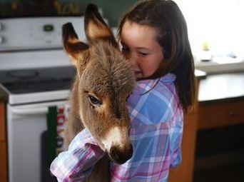Baby Donkey indoors