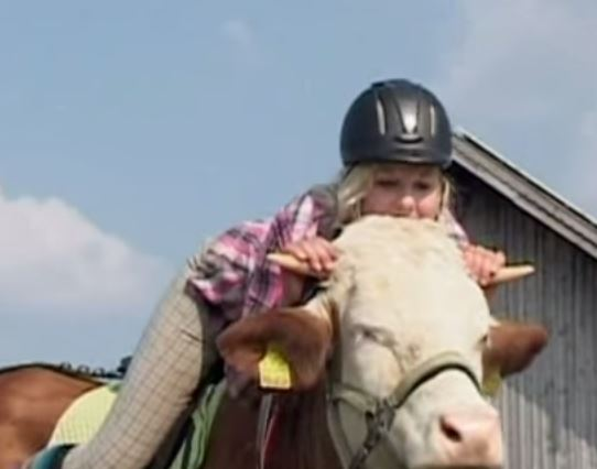 girl rides cow like a horse