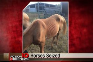 Neglected Aransas Pass Horses