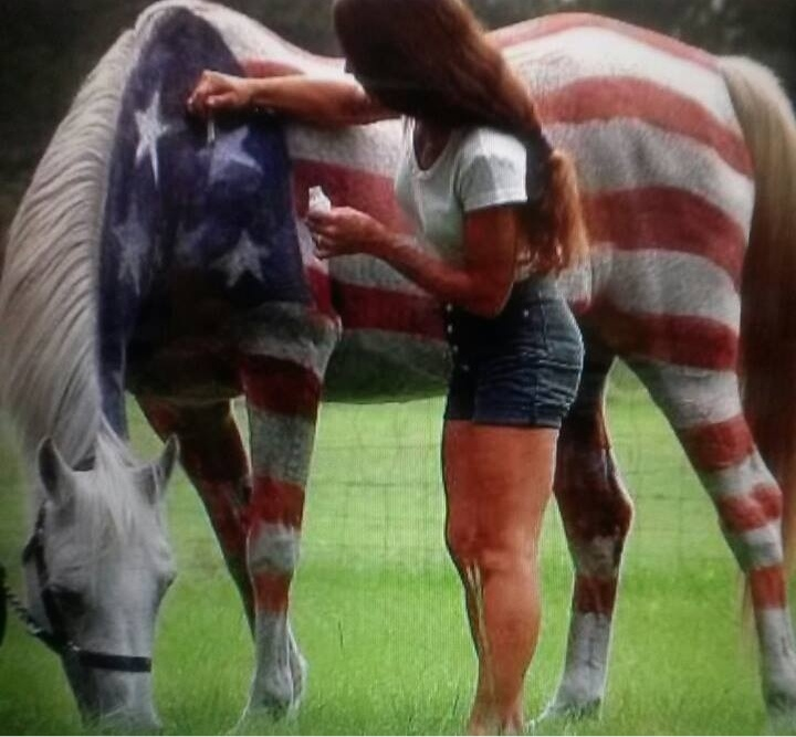 4th of July horse painted as flag