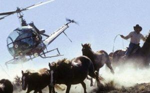 livestock vs wild horses